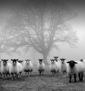 Pourquoi choisir la laine ?